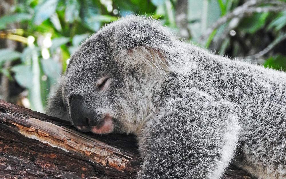 Spánok je pre kvalitu tvojho dňa dôležitý